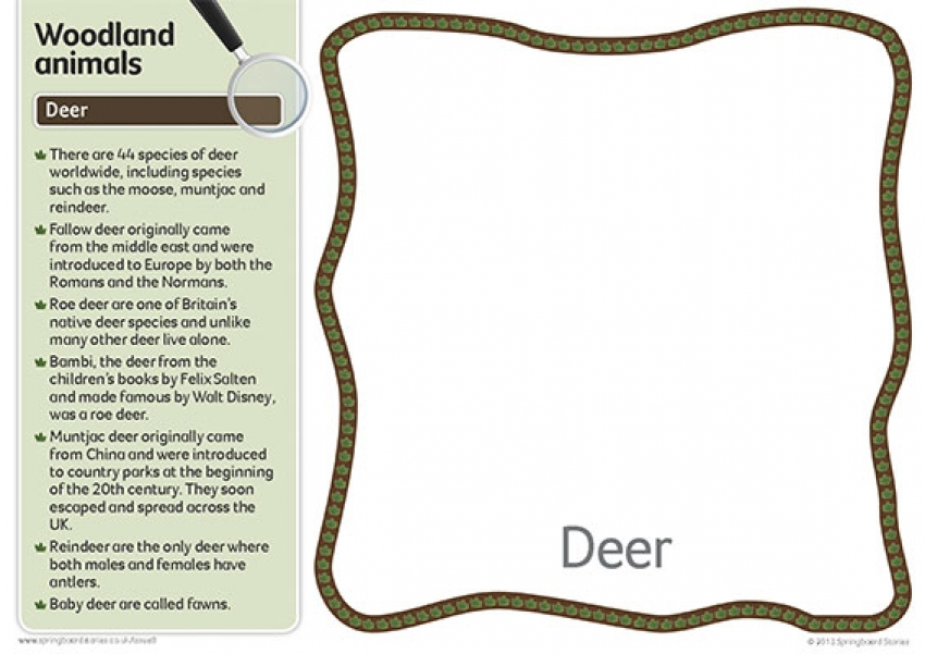 Woodland fact cards primary resource – text only