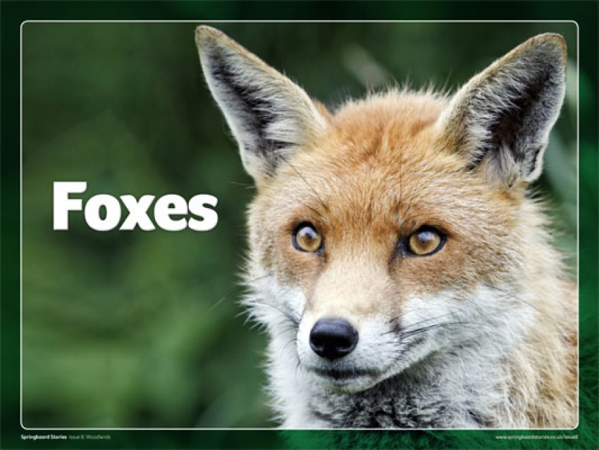 Foxes slideshow primary resource