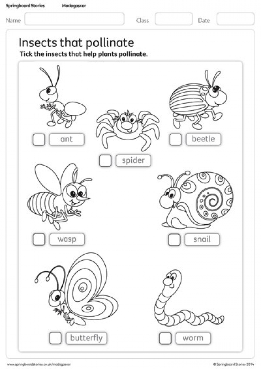 Insects that pollinate